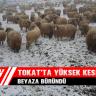 Tokat'ta Yüksek Kesimler Beyaza Büründü